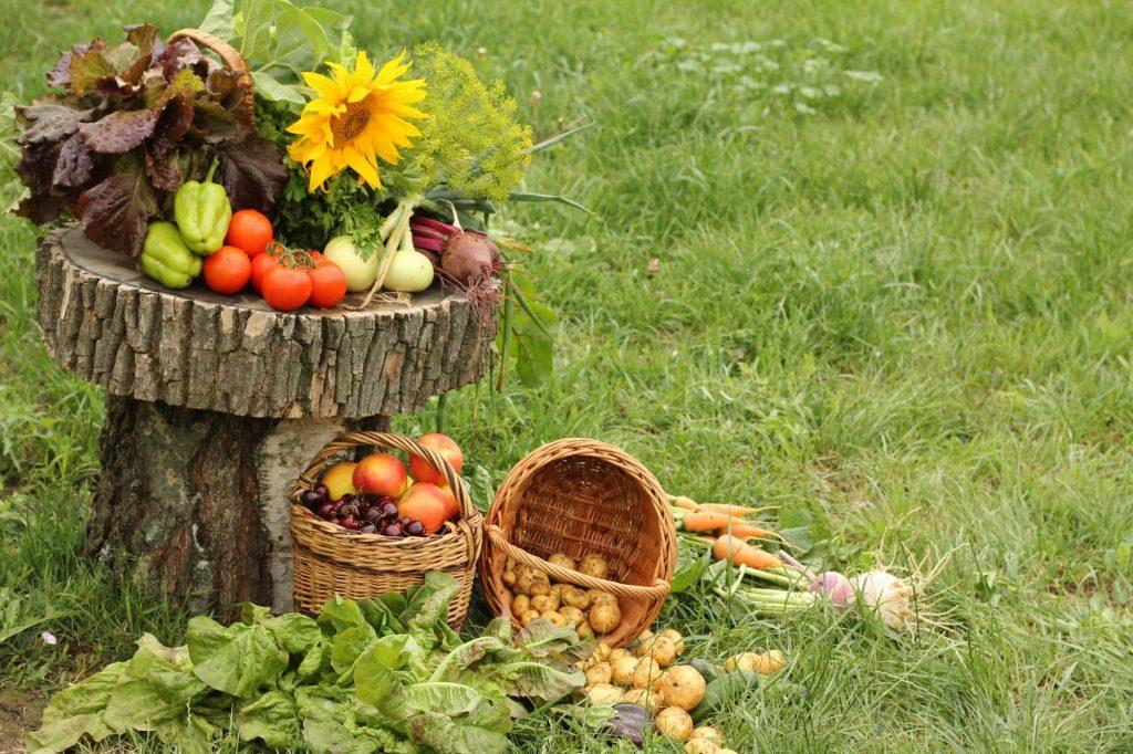 День зарайского огородника